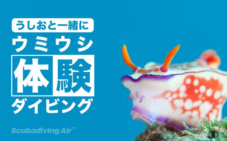 ウミウシ体験ダイビング