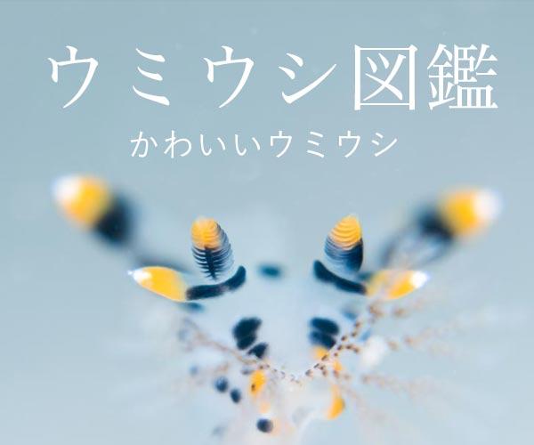 ウミウシ図鑑