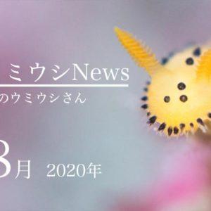 ウミウシnews2020年8月