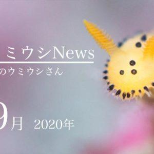 ウミウシnews2020年9月