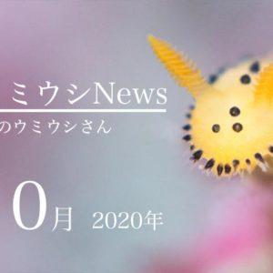 ウミウシnews2020年10月