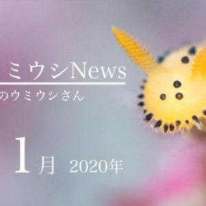 ウミウシnews2020年11月
