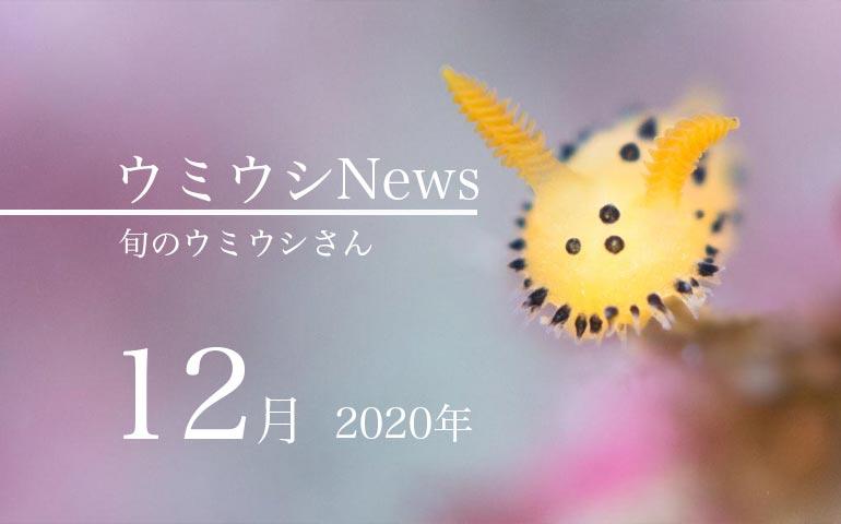 ウミウシnews2020年12月