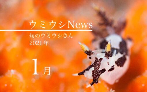 ウミウシnews2021年1月