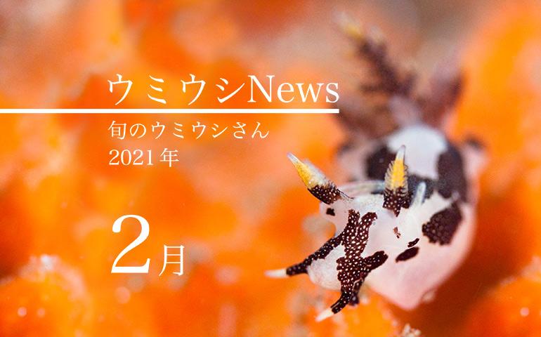 ウミウシnews2021年2月